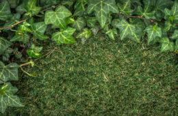 Kunstplant tuin