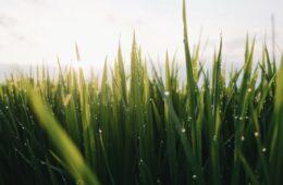 Waarom graszoden een goed idee zijn bij een nieuwbouwhuis